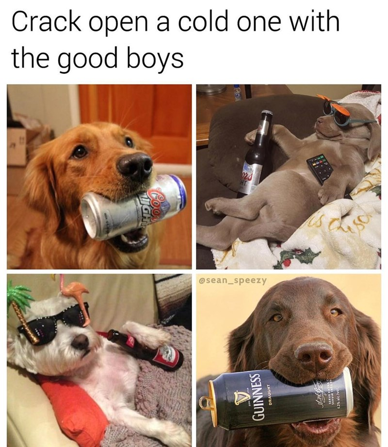 Funny four panel meme regarding cracking a cold one with vthe boys, but it is about the good boys - dogs.