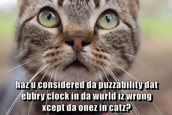 Curious looking cat picture overlayed with text questioning if maybe all clocks are wrong and only cats have the right time.