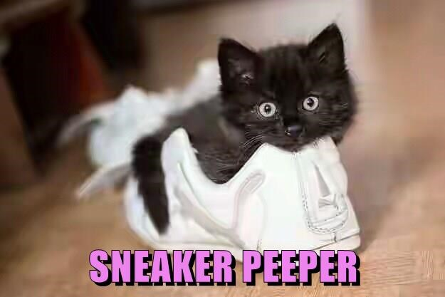 Cute meme of a black cat in a white sneaker.
