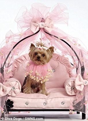 Dog - Diva Dogs SWNS.com