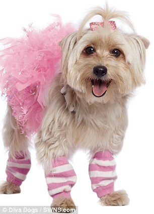 Dog - Diva Dogs / SWNS.com