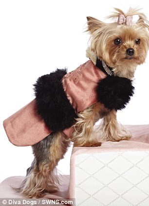 Dog clothes - Diva Dogs SWNS.com
