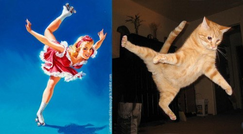 pin up cats - Cat - wowqun suednadayeoge