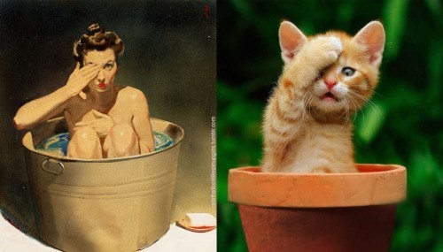 pin up cats - Cat