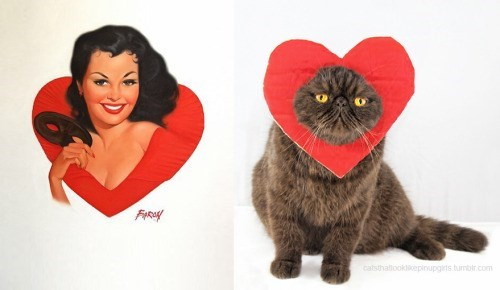 pin up cats - Cat - FRY catsthallookepinupgirts.tumbir.com