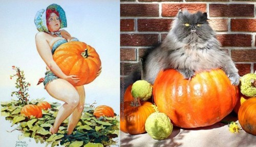 pin up cats - Winter squash