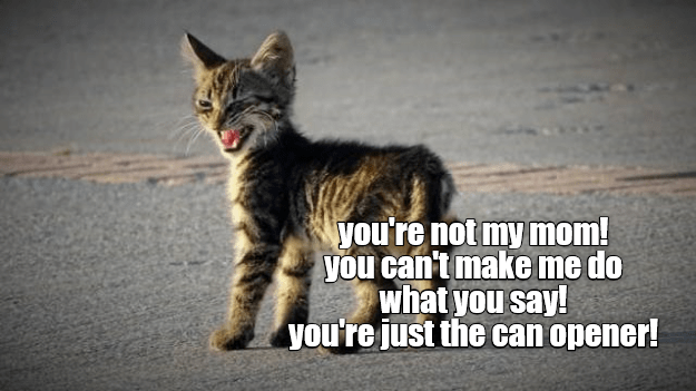 Fresh kitten meme saying that you are just a can opener and not his mom.