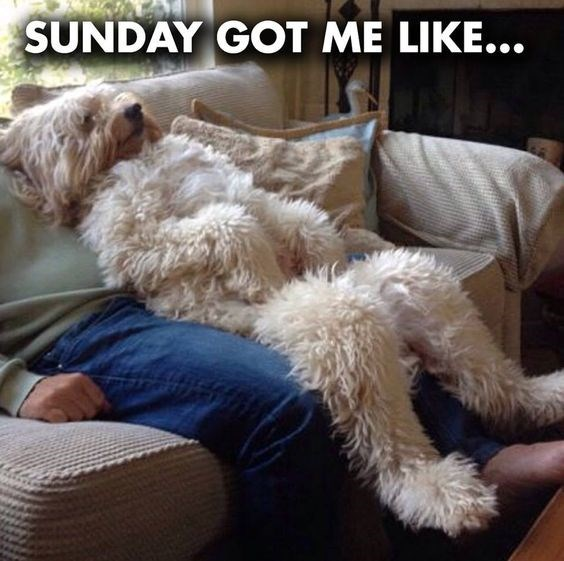 A picture of a dog enjoying Sunday by laying down on top of his owner but sitting upright like his owner.