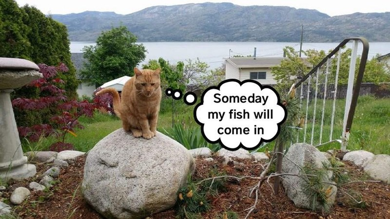 Meme of a cat waiting for that day that his FISH comes in.