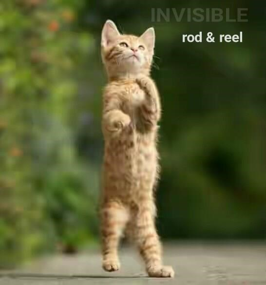 Invisible cat meme of kitty with rod and reel you just can't see