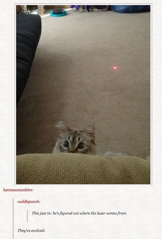 A picture of a cate starting at the laser and understanding that the red dot comes from there.