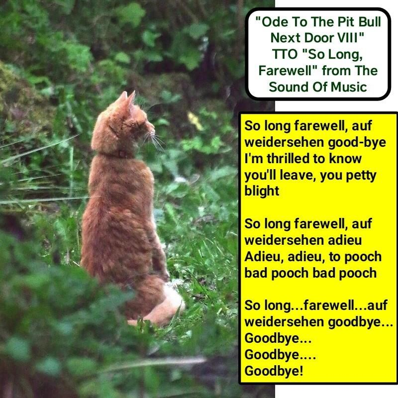 singing cat meme of ode to the pit bull