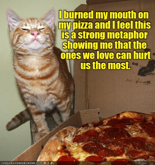 Metaphor cat meme about pizza and burning your mouth and only hurt by the ones you love.