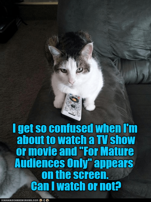 cat meme asking if it ok to watch certain TV shows and asking a deeper question in the process.
