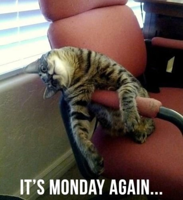 a cat sitting in a chair looking confused and sad and saying its Monday again