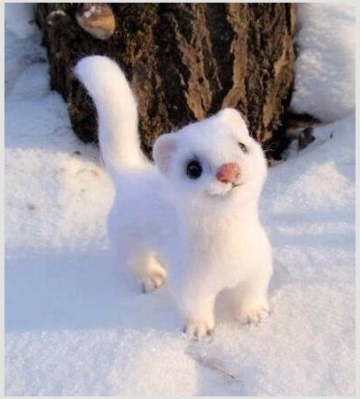 Fluffy little critter that totally looks like a toy, is actually a live animal called a Snow White Weasel or an Ermine.