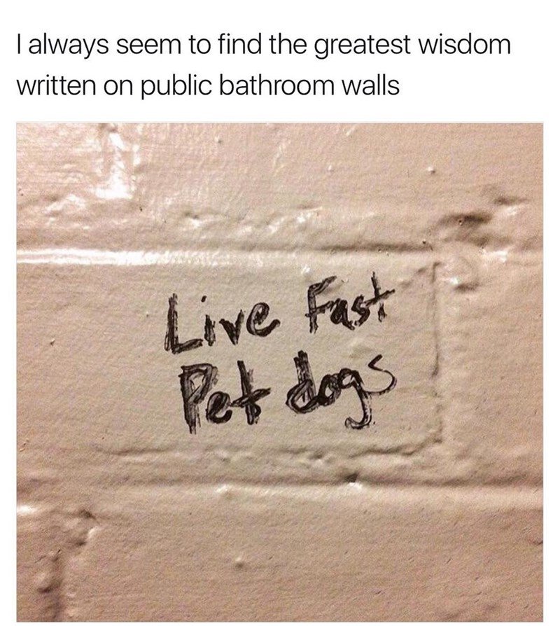 Funny meme about bathroom graffiti that says live fast, pet dogs.