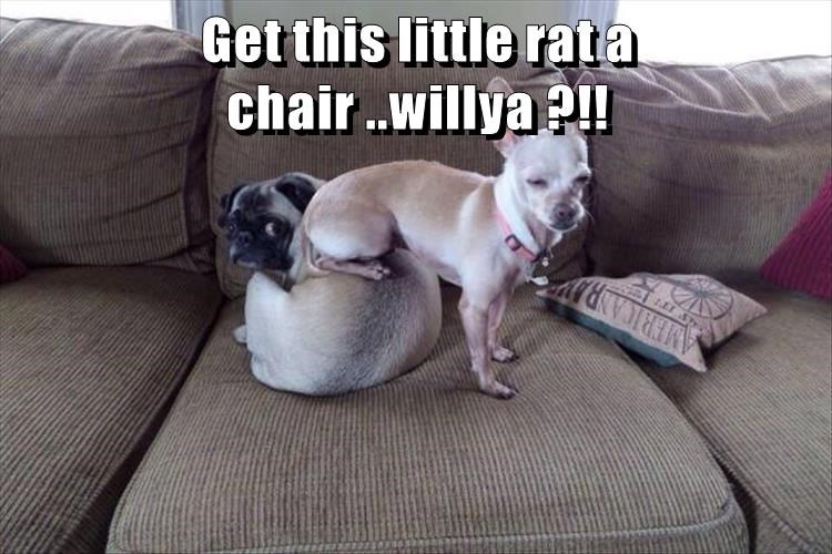 Get this little rat a chair ..willya ?!!