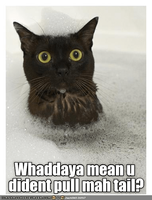 Funny meme of a black cat in the tub with bubbles and is shocked with caption exclaiming that you did indeed pull his tail, or did you...