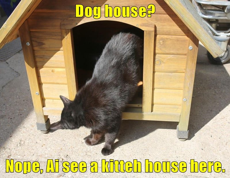 Meme of a cat going into a dog house and declaring it his own.