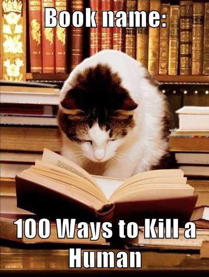 Cat reading a book about how to kill human in funny cat meme