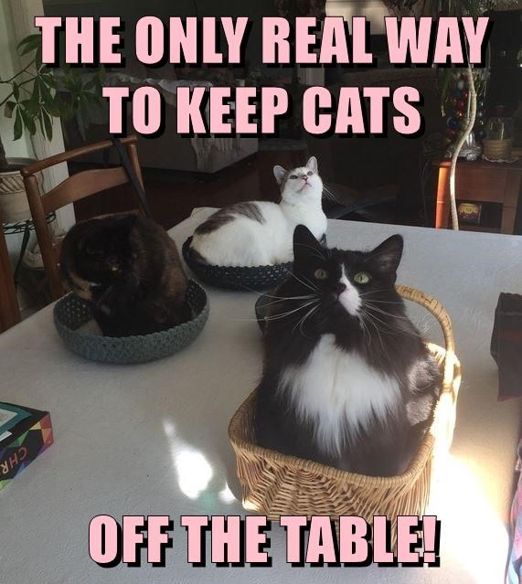 Funny meme about how to keep cats off the table and it is by putting baskets on the table for them to sit in, thereby avoid said direct contact with the furniture. Cat people, that is as good as it gets.
