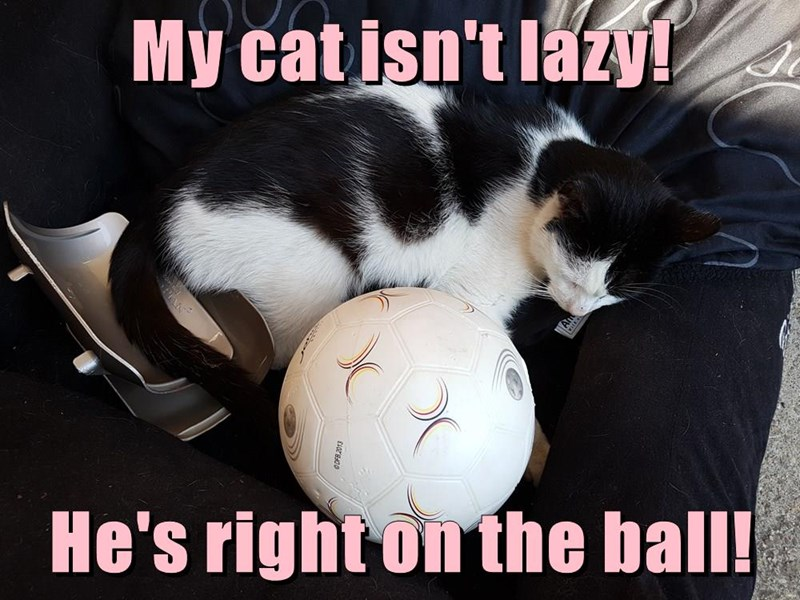 Funny cat meme of a kitty that is literally on the ball.