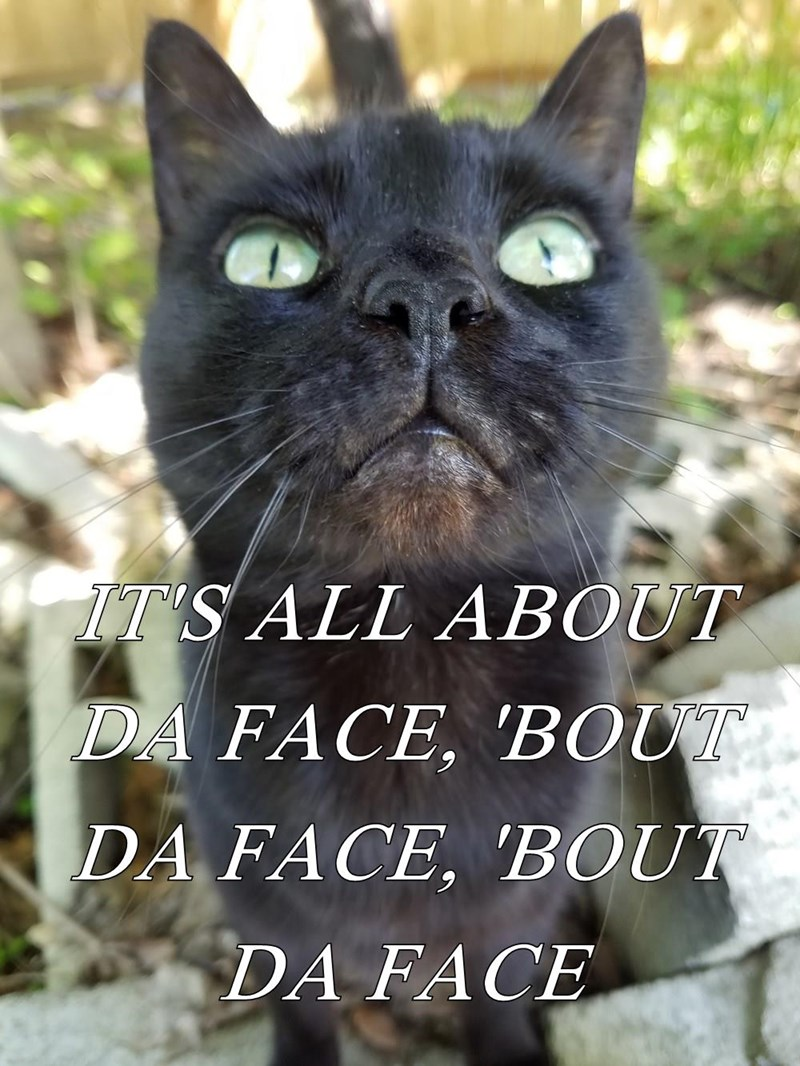 Funny cat meme making fun of the Meghan Trainer Song All About That Bass, but modified about that face, because the cat has a cute face.