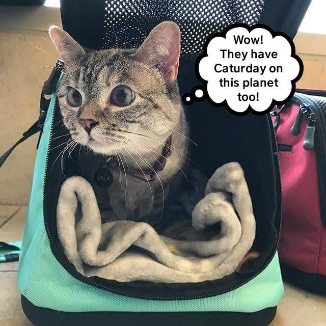 Cat meme of kitty coming out a travel bad with a shocked look that they also have caturday on this planet.