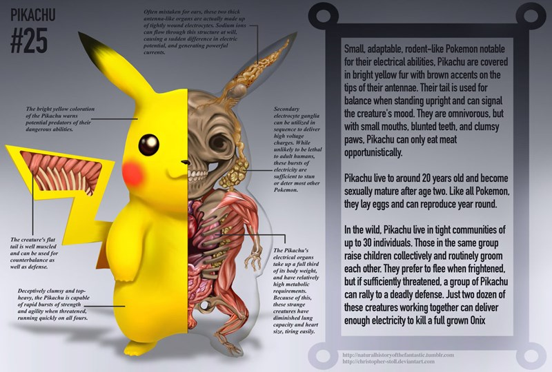 anatomy,Pokémon,awesome,Fan Art,pikachu,pokemon logic,video games,nintendo,win