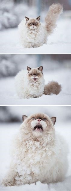 Cat pictures of kitty freaking out the first time seeing snow.