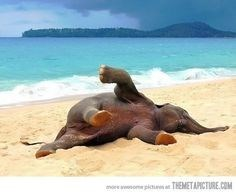 Baby elephant rolling around in the sand on the beach