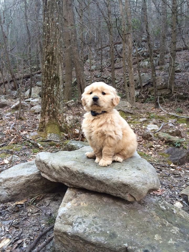 Cute puppy standing proudly on a few slabs of rock in the woods.