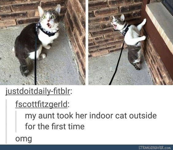 Funny pictures of a cat with a leash on that looks stunned, comment string explaining it is the first time the cat has ever been outdoors.