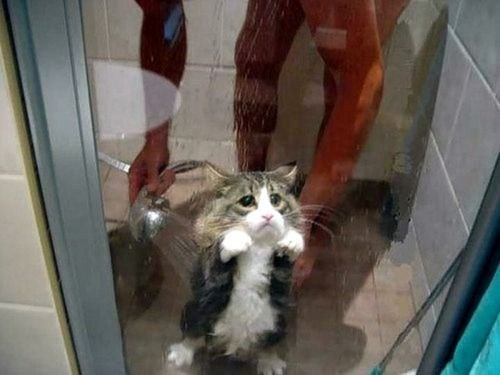 Last picture of animal's first experiences - The look of betrayal on a cat taking his first shower.