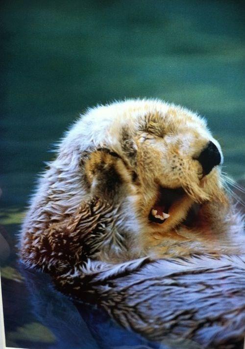 Snout