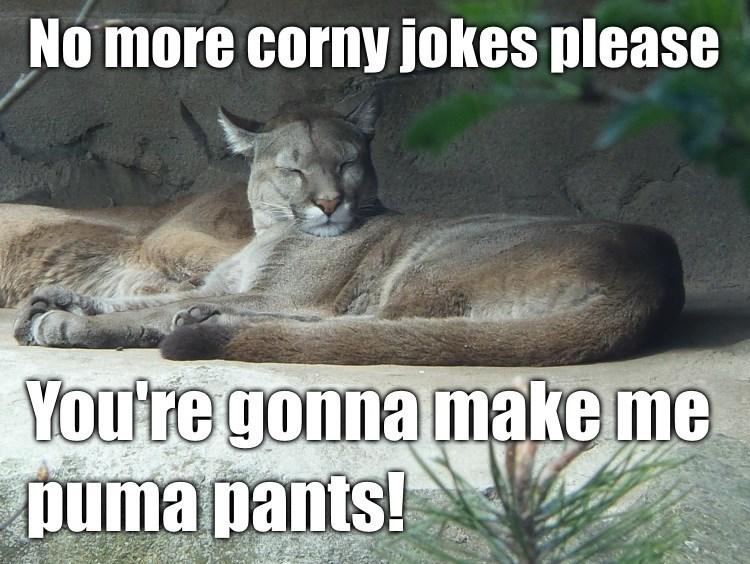 Tuesday Puma meme of corny jokes for puns going to ruin his pants.