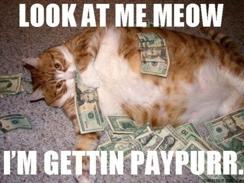 funny meme of a cat with money all over him and a horrible pun about getting paid.