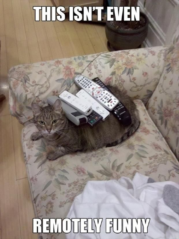Tuesday pun about remotes on a cat who doesn't find it funny at all.