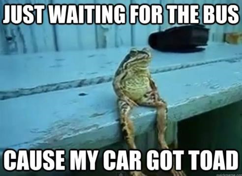 Meme of frog who had his car toad - terrible pun
