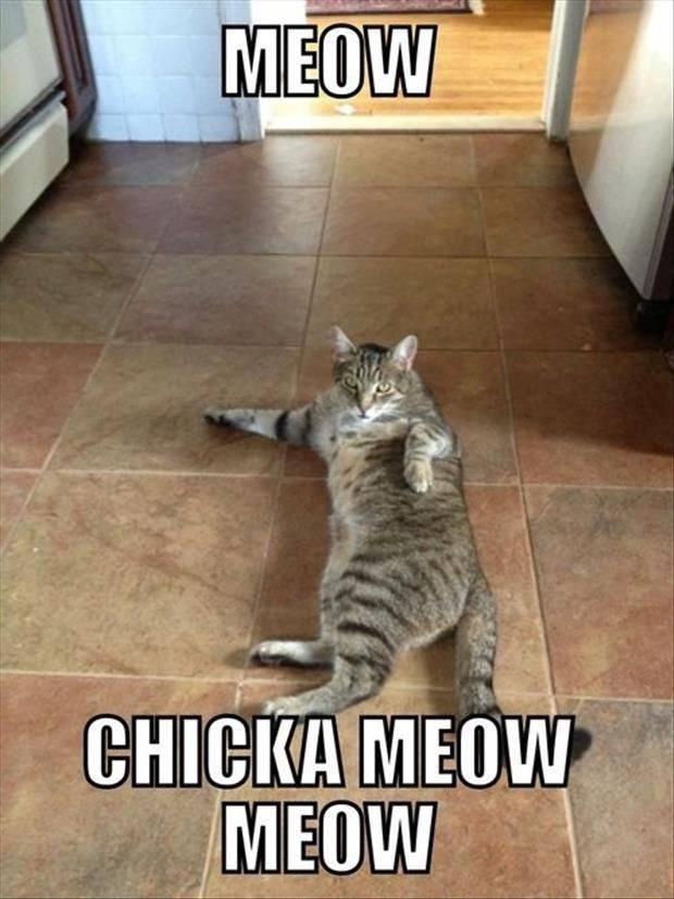 Meow pun cat