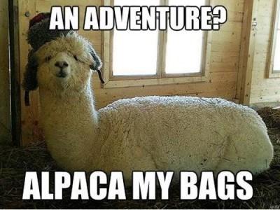 Meme of a pun told by an alpaca