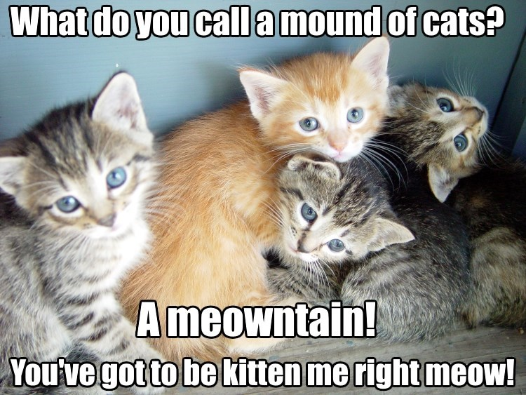 What is a mound of cats, a mewontain