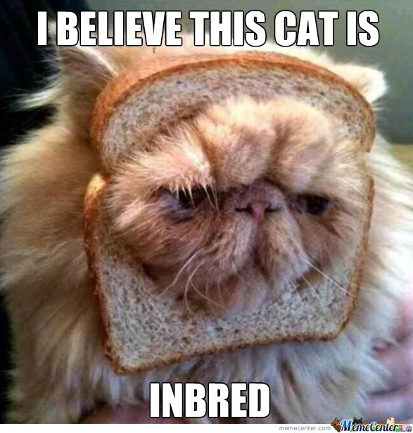 funny cat with his head stuck in bread, captioned as a pun about him being inbred.