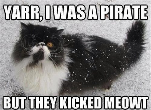 Funny meme pun of a cat that looks like he used to be a pirate.