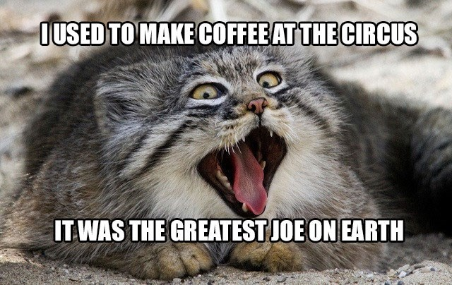 Terrible pun of cat who used to make the greatest Joe on earth when he was in the circus.