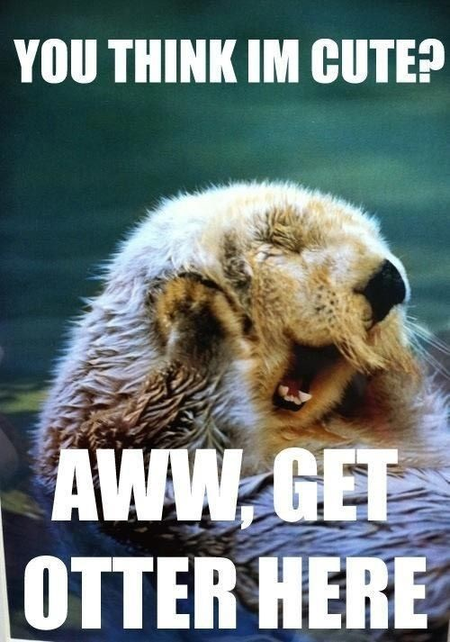 Very cute otter meme pun.