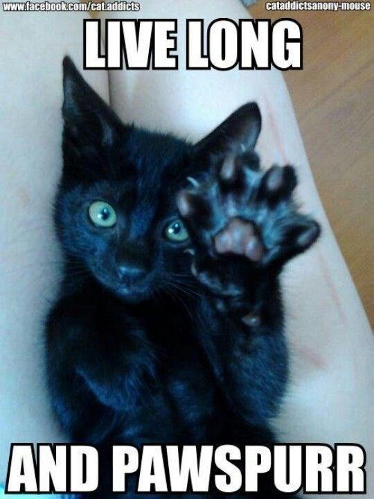 Pun of a cat giving the Vulcan salute.