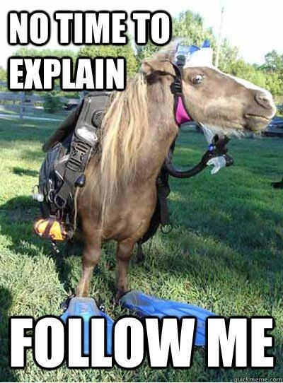 horse meme with pic of crazed looking horse wearing random accessories and asking you to follow it