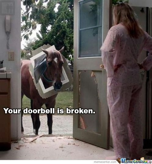 pic of a horse standing at the door of a house with a pet door hanging around its neck
